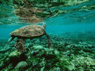 vakantie-australie-great-barrier-reef